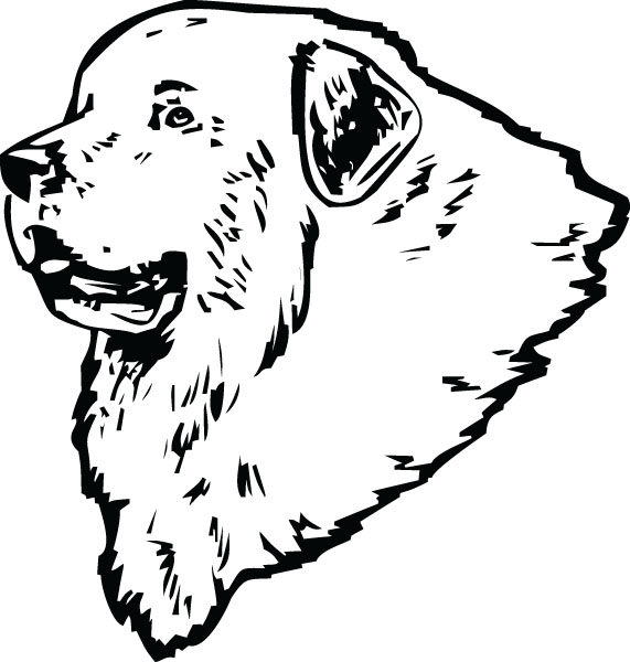 Great Pyrenees Head Dog Breed Graphic Art For Custom Gifts.