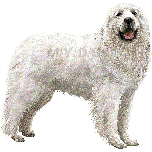 Great Pyrenees, Pyrenean Mountain Dog clipart graphics (Free clip art.