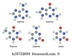 Pyrimidine Clip Art EPS Images. 31 pyrimidine clipart vector.