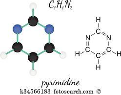 Pyrimidine Clip Art Royalty Free. 31 pyrimidine clipart vector EPS.