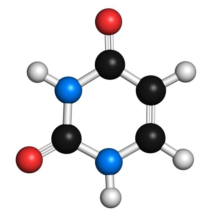 Nitrogenous Bases.