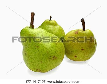 Picture of Pear Psylla, pyrus communis, India t77.