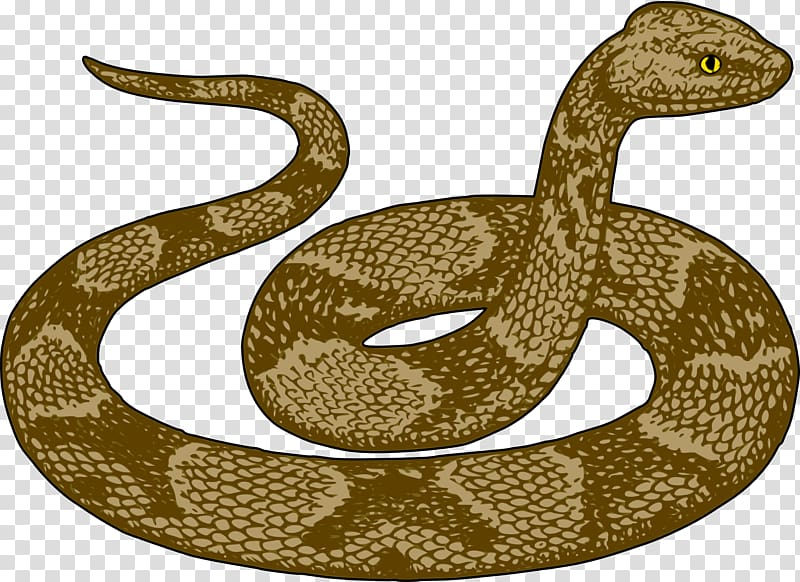 Snake Free content , Scary Python transparent background PNG.