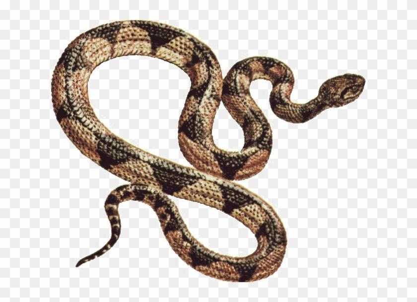 Snake Png Free Download.