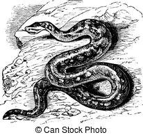 Pythonidae Illustrations and Clip Art. 33 Pythonidae royalty free.