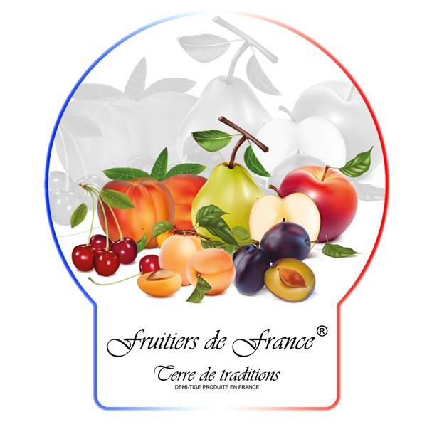 Acheter Prunier Quetsche d'Alsace pas cher, au meilleur prix.