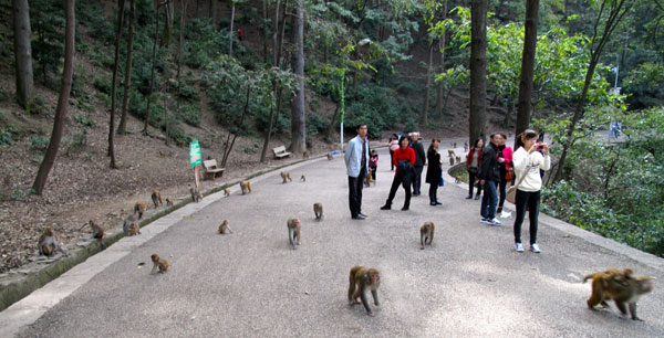 Monkeys rule in Qianling[1].