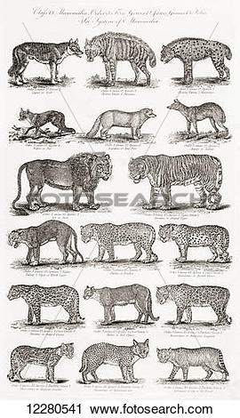Stock Photography of Different types of Quadrupeds, including.