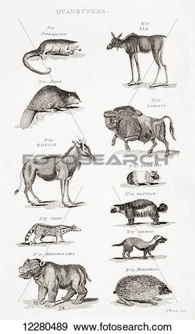 Stock Photograph of Different types of Quadrupeds. From an 18th.