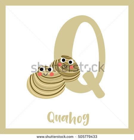 Quahog Stock Photos, Royalty.