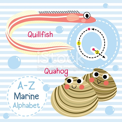 Letter Q Tracing Quahog Quillfish Marine Alphabet stock vector art.