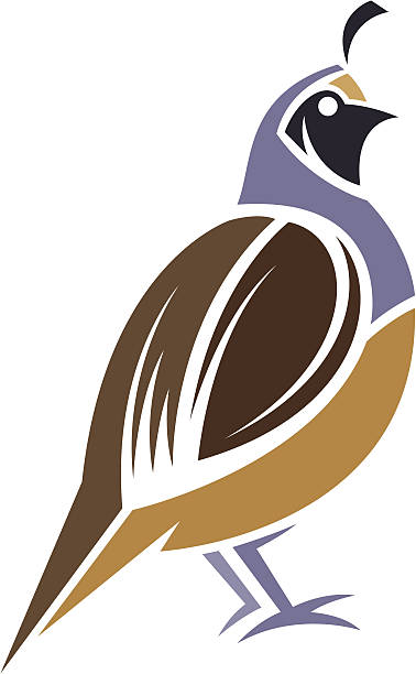Quail Bird Clip Art, Vector Images & Illustrations.