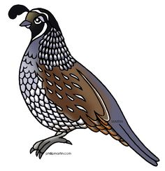Pin by Katr A on Bird Art Quail.