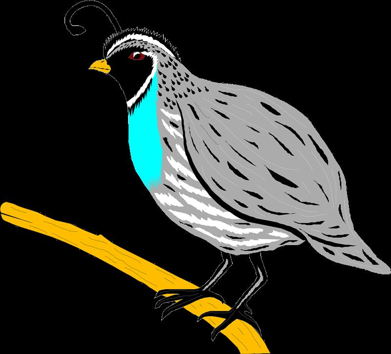 Free to Use & Public Domain Quail Clip Art.