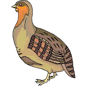 Cute quail clipart.