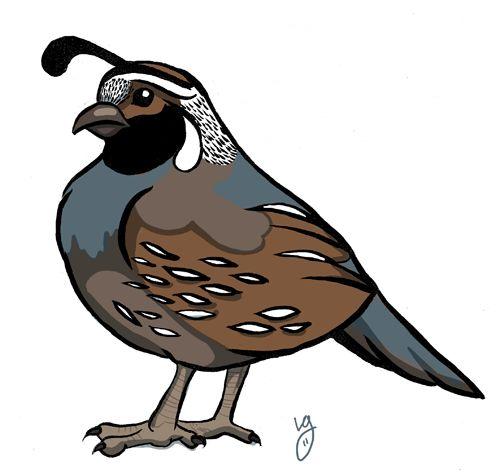 Clipart quail.