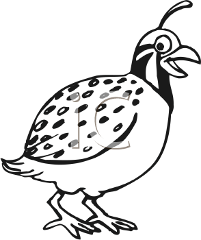 Quail Clipart Black And White.