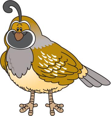 Quail Bird Clipart.