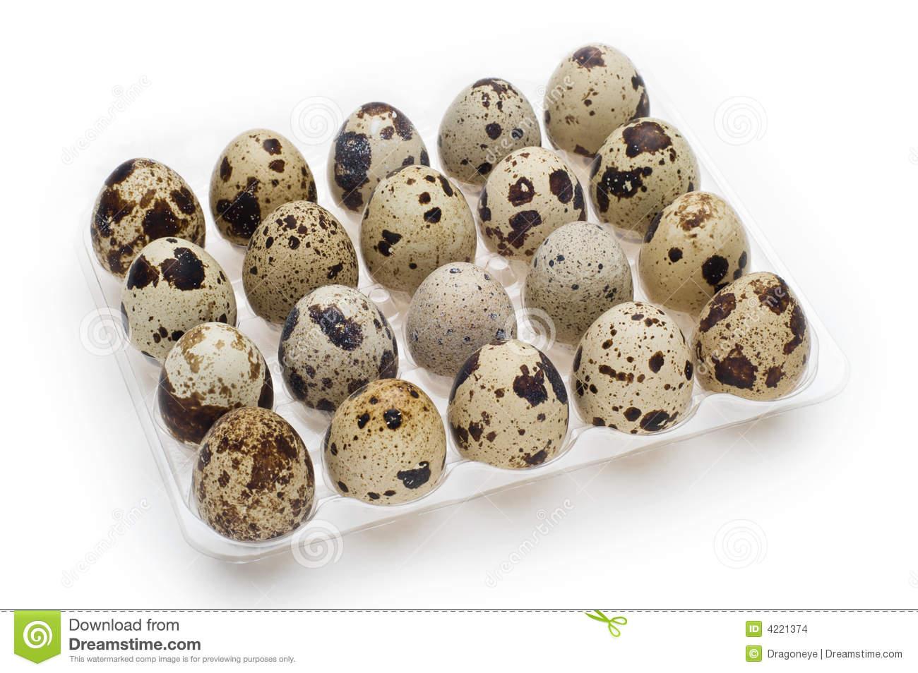 Quail egg clipart.