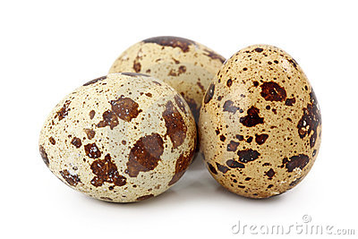 Common Quail Eggs Royalty Free Stock Images.