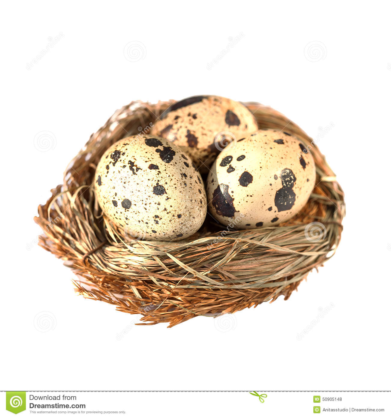 Nest With Quail Eggs Isolated On White Stock Photo.