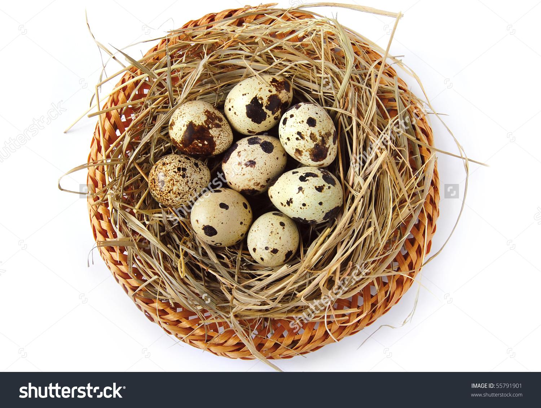 Nest Quail Eggs Isolated On Background Stock Photo 55791901.