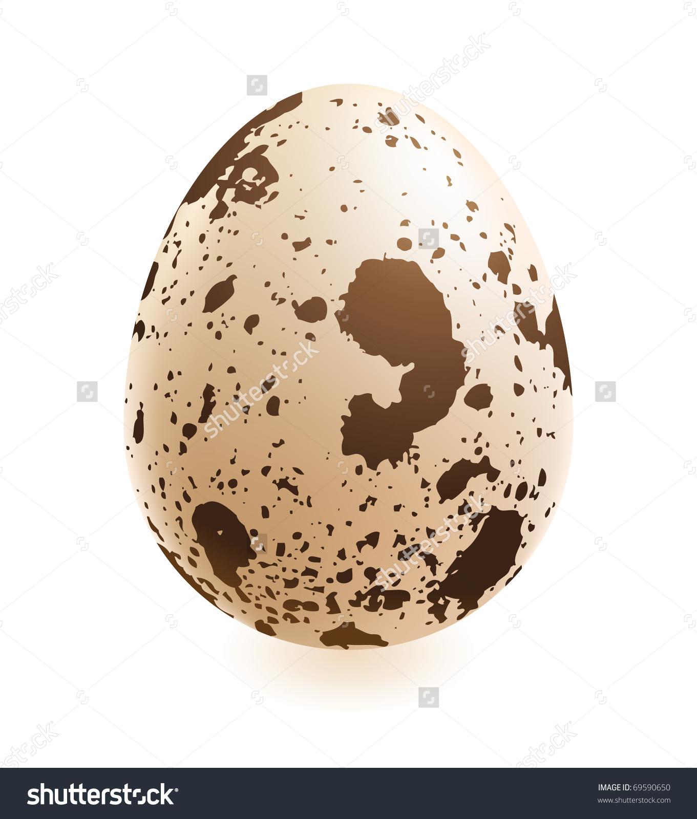 Quail Egg Stock Vector 69590650.