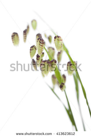 Seedheads Stock Photos, Royalty.