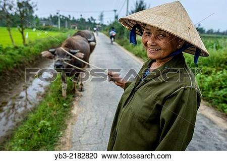 Stock Photography of Woman With Water Buffalos, Hoi An, Quang Nam.
