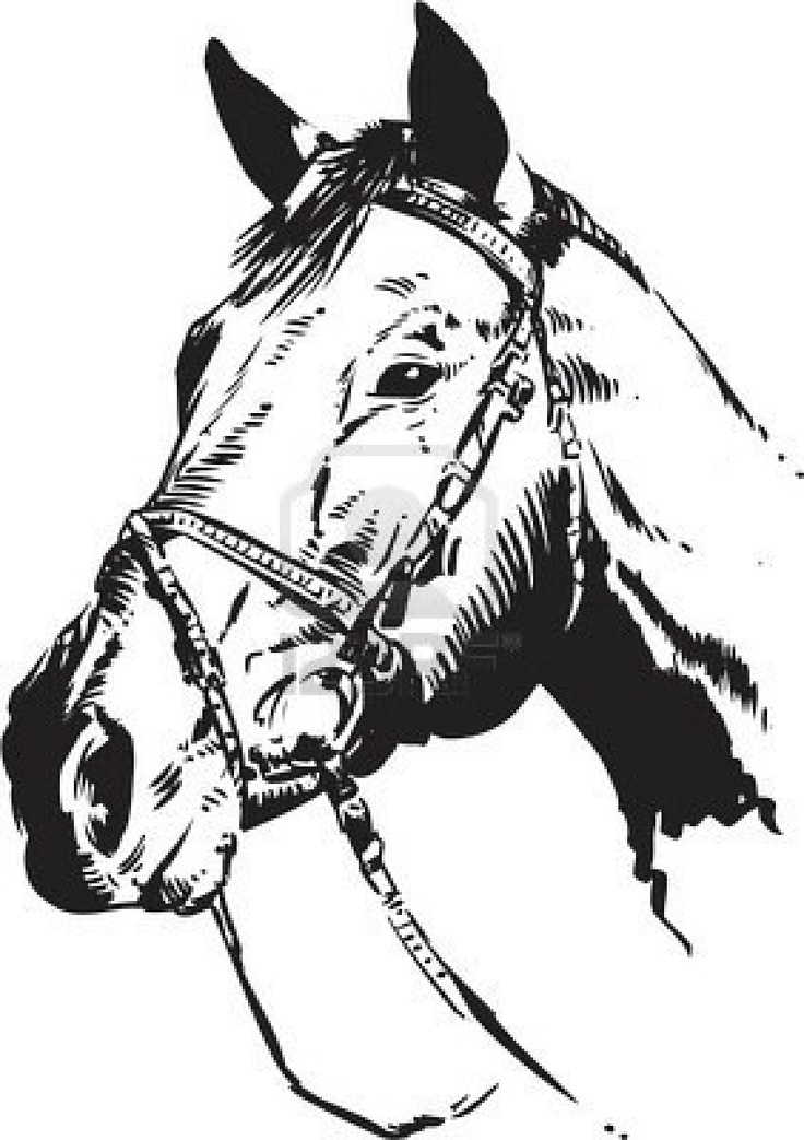 quarter horse head clip art wwwpixsharkcom images