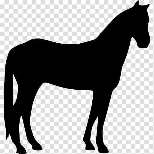 Criollo horse Arabian horse American Paint Horse American.