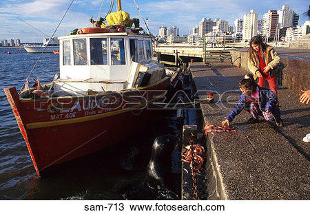Stock Photo of Girl Feeding Sealions on Quayside Uruguay sam.