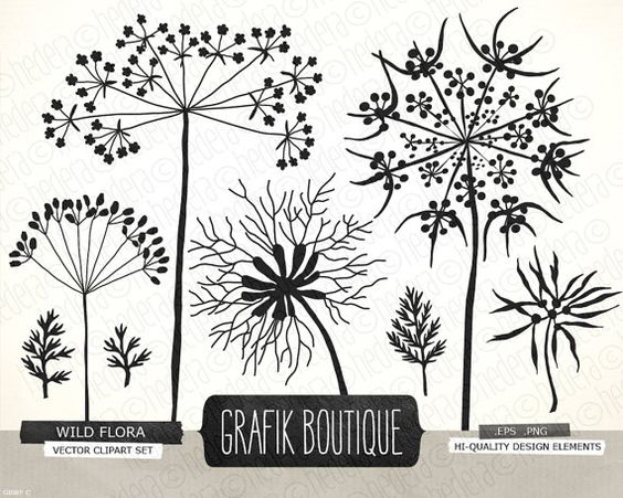 Wild herbs flowers silhouette vector clip art, queen anne's lace.