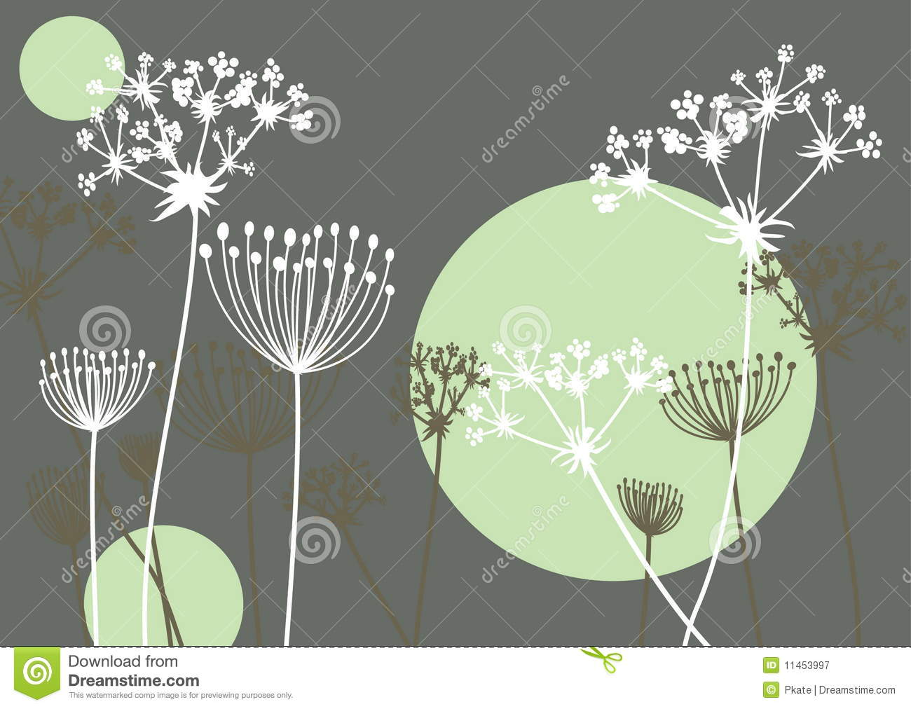 Queen Anne's Lace Stock Illustrations.