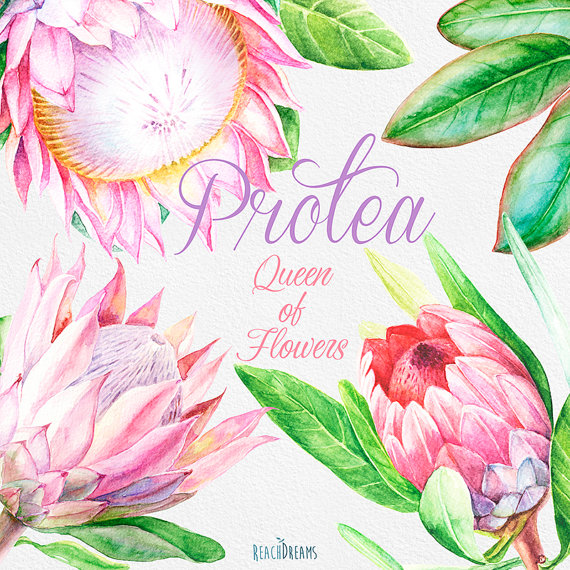 Protea Queen of Flowers Wedding Watercolor Flowers and.