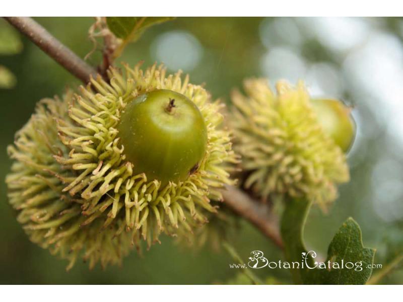 blog.BotaniCatalog.com.