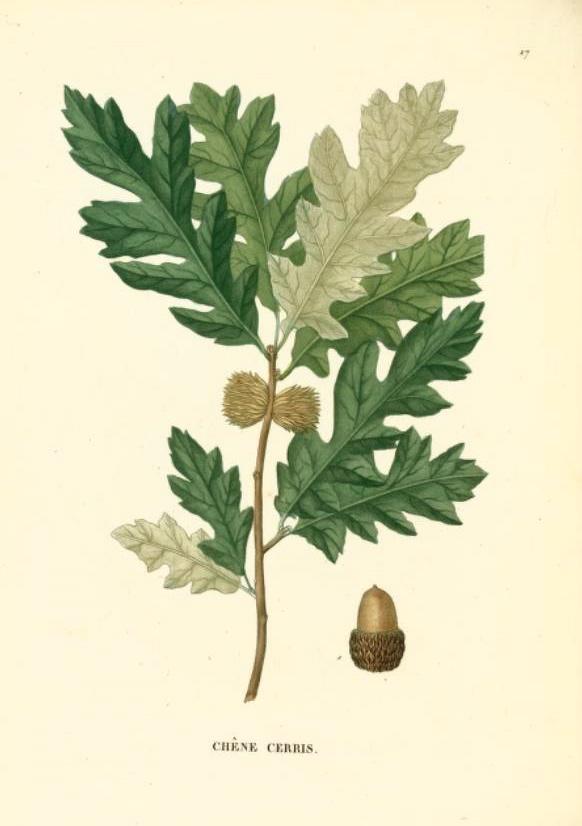 Hortus Camdenensis.