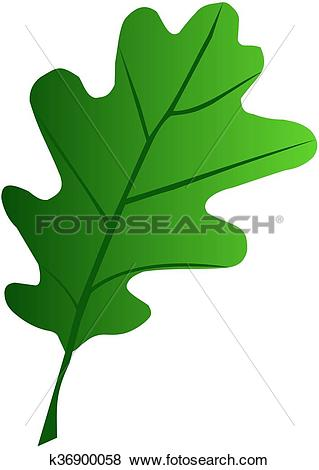 Clip Art of oak,Quercus petraea k36900058.