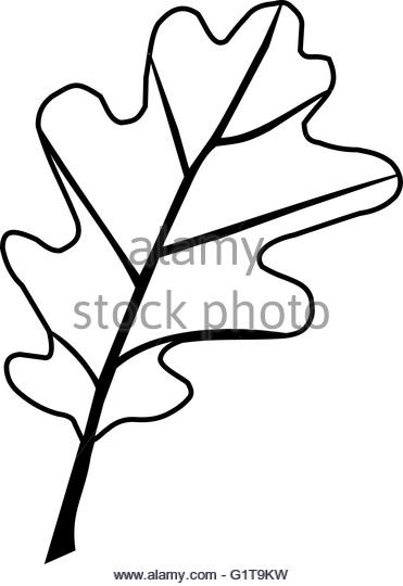 Quercus Black and White Stock Photos & Images.