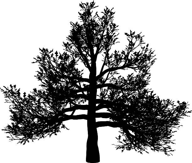 Quercus Rubra Clip Art, Vector Images & Illustrations.