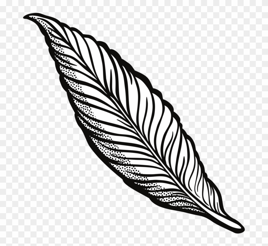 Feather Drawing Line Art Quill Cartoon.