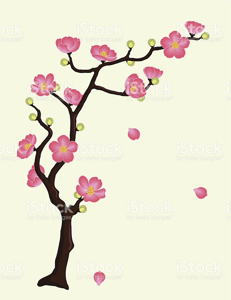 Flowering Quince Or Cherry Blossoms stock vector art 165533388.