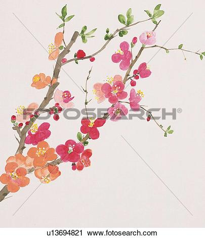 Clipart of Branch of Japanese quince with pink flower u13694821.