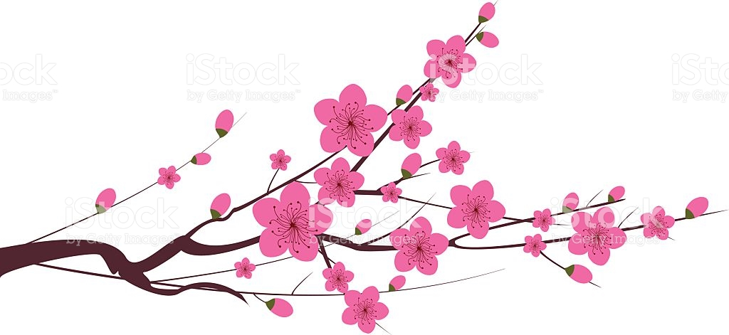 Japanese Plum Blossom stock vector art 525363863.