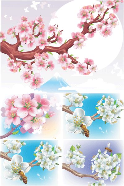 1000+ images about Cherry blossom on Pinterest.