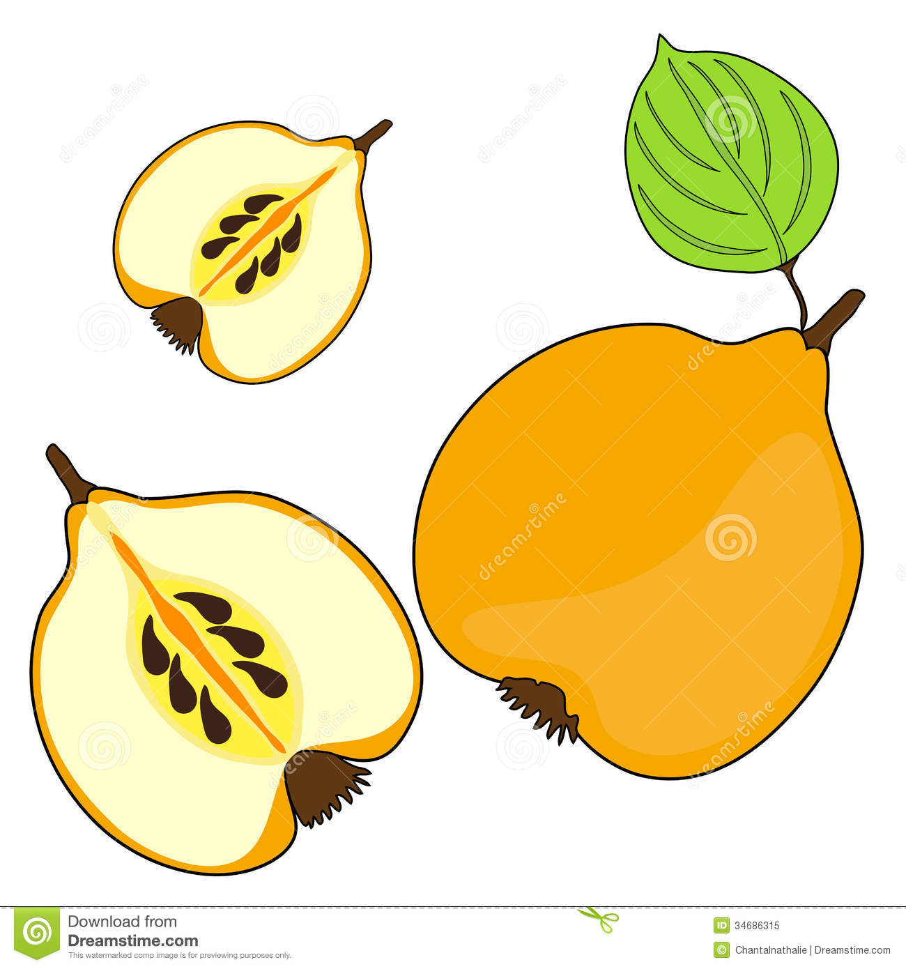 Quince Cartoon Stock Photos, Images, & Pictures.