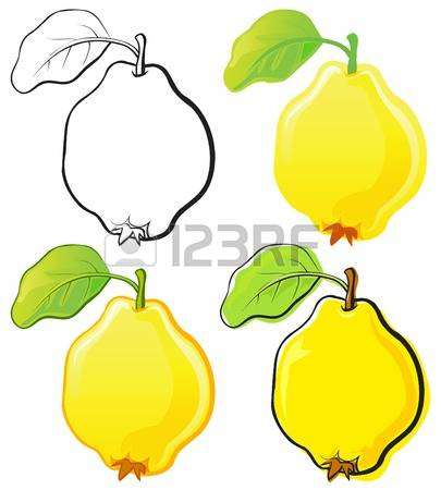 537 Quince Cliparts, Stock Vector And Royalty Free Quince.