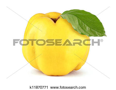 Quince Stock Photos and Images. 4,247 quince pictures and royalty.
