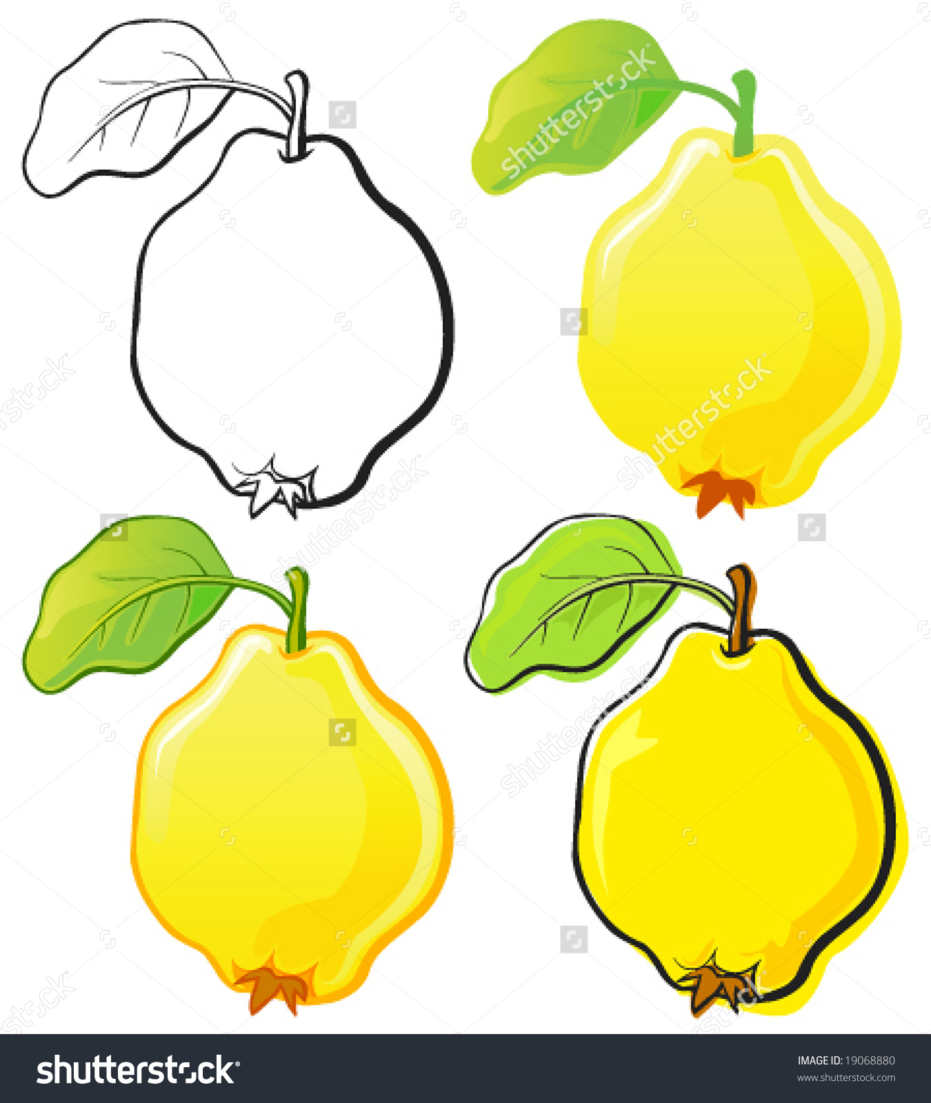 Quince Stock Vector 19068880.