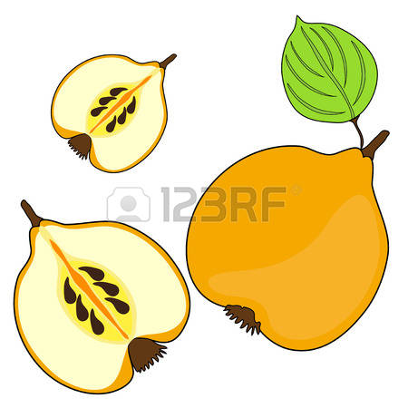 624 Quince Cliparts, Stock Vector And Royalty Free Quince.